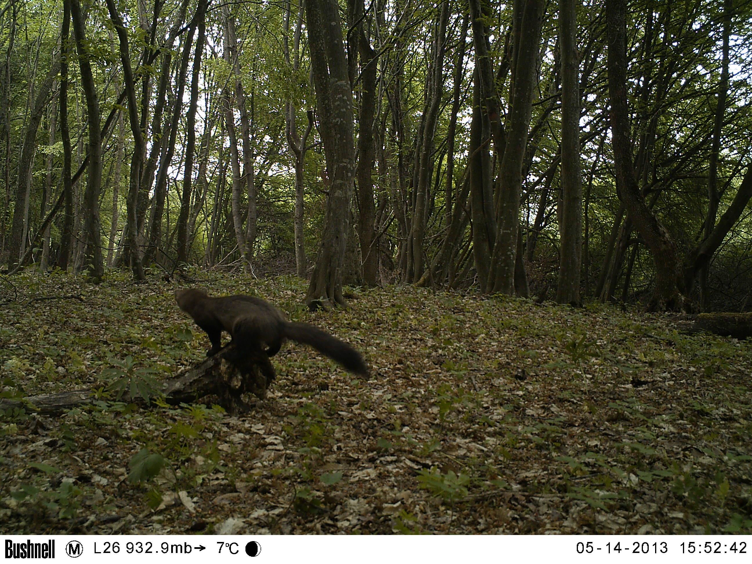 Wildlife conservation case study