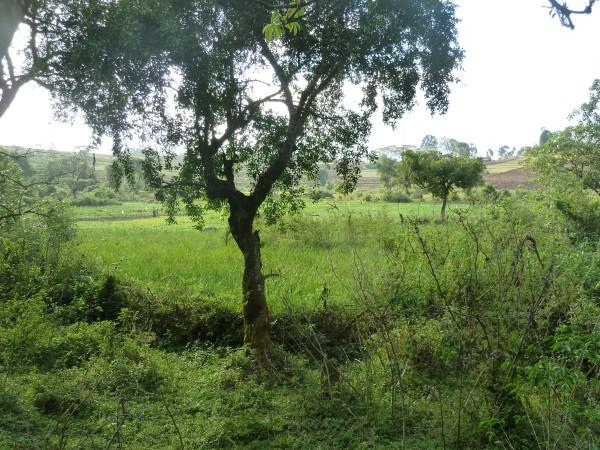 Near Yayu