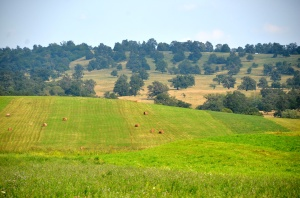 Figure 1. Ancient oak wood-pastures are still common in Southern Transylvania, Romania. In the front a hay meadow mowed with small machines. Photo by Orsolya Toth.