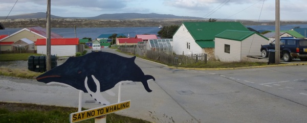 Caption: Stanley, the capital, looking toward the harbour. In the foreground, one of the many signs a local metalsmith placed around town decades ago to lobby for the end to whaling. His yard is now an ad-hoc museum to the battle, including harpoons and whale skeletons. In the background, several family greenhouses.