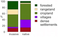 According to the location of invasive and native rose populations the native range has a larger proportion of residential areas (data =anthropogenic biomes: Ellis and Ramankutty, 2008, Front Ecol Environ.)